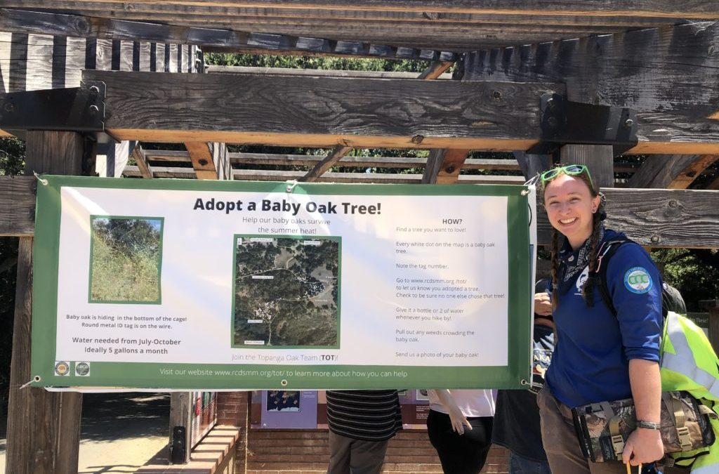 Adopt a Baby Oak at Trippet Ranch!